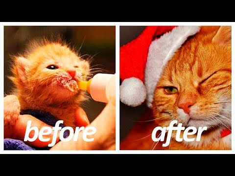 40 Cat Breeds Before and After | Kitten to Adult HD