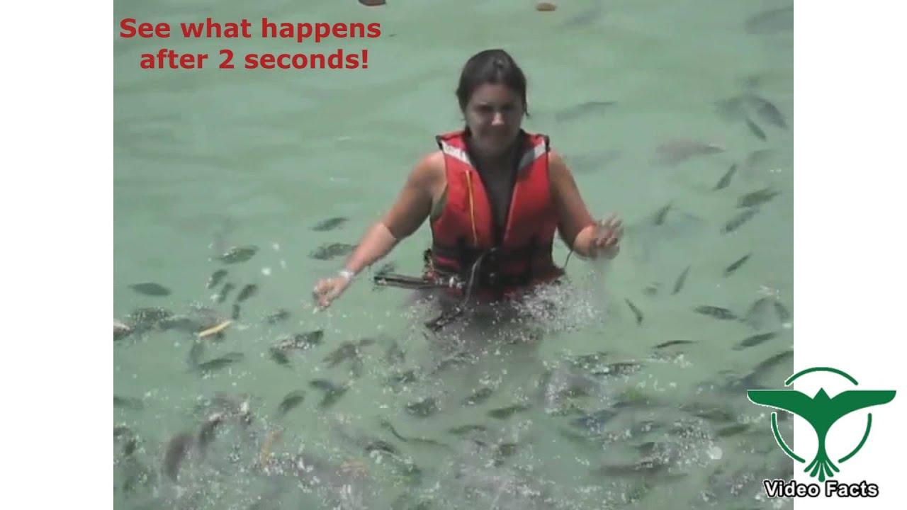 BABY SHARK ATTACKS Woman Feeding Fishes - YouTube
