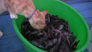 Керченский улов. Маяк рыбалка. Кот в восторге-кошке...змей подавай :)