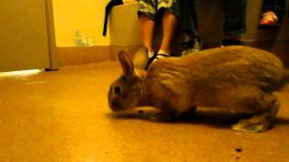 Adopting a bunny from the Kroc-Copley Animal Shelter, San Diego Humane Society