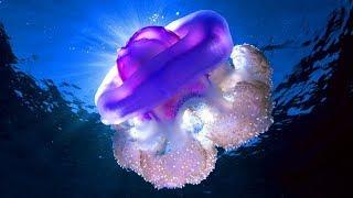 Самая большая медуза в Одессе заснула. Теперь можно купаться в море