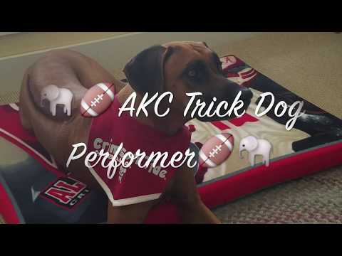 AKC Trick Dog Performer