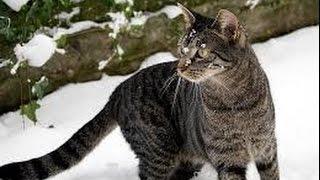 科學週刊六 (8分鐘) 急性脊髓灰白質炎。科學界之性別歧視。野化的家貓。實驗室內的污染。把傳粉者一并拖下水的殺蟲劑。