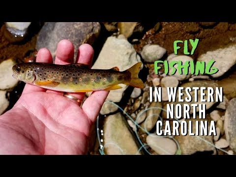 Fly Fishing In Western North Carolina Outside Of Boone And Blowing Rock (Episode 12 - 2019)