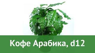 Кофе Арабика, d12 обзор ЦКР0038 бренд производитель