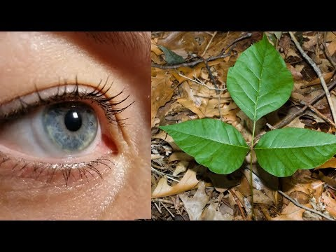 Best Poison Ivy Video Identification Guide