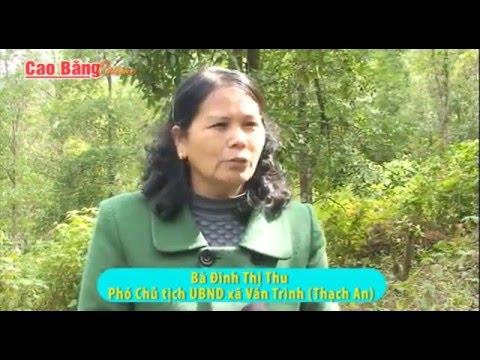 Thạch An, Cao Bằng:  Phát triển cây hồi theo hướng hàng hoá