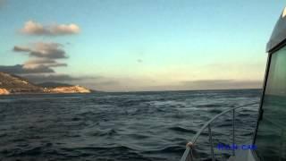 ORCAS EN LA BAHIA DE BENZÚ (CEUTA-SPAIN)