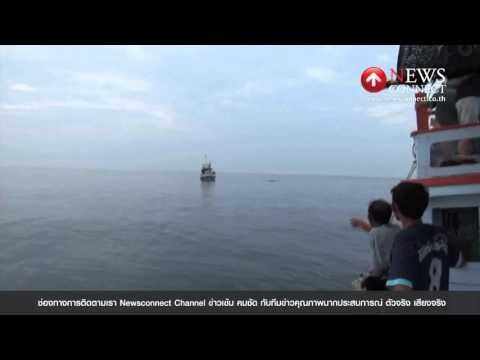 ไม่ผิดหวัง! แห่ชมวาฬบรูด้าที่หาดเจ้าสำราญช่วงวันหยุด : NewsConnect Channel