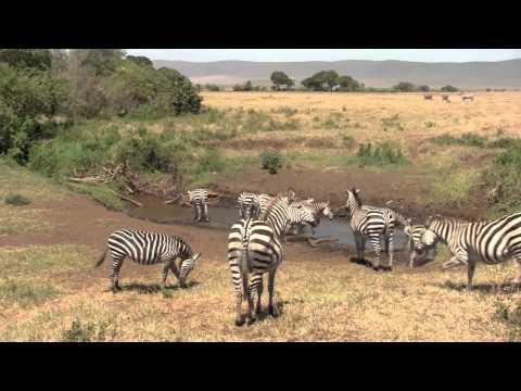 Safari in Tanzania 2012