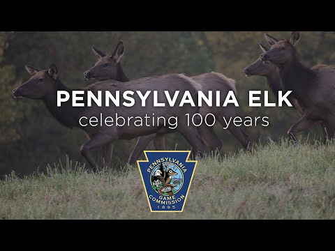 Pennsylvania Elk: Celebrating 100 Years - Long Version