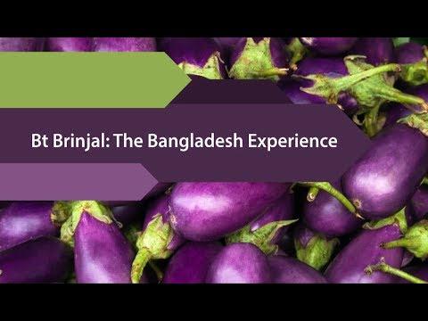 Bt Brinjal: The Bangladesh Experience