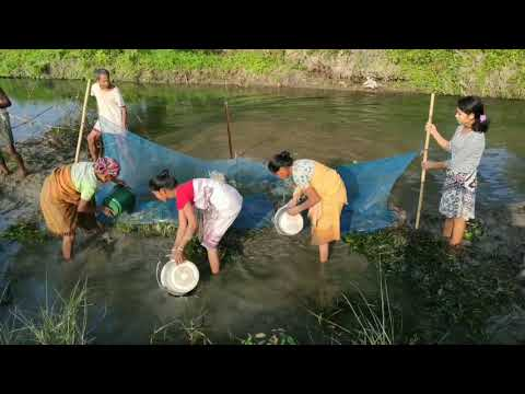 #Tribal #fishing The 'Khob' Fish Trapping In River.