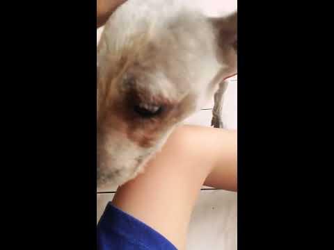 Bermain bersama Anjing Saya #2