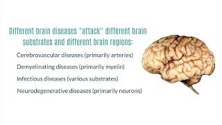 Neurodegenerative Diseases of the Brain