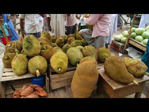 Jackfruit Tree in Bangladesh Village