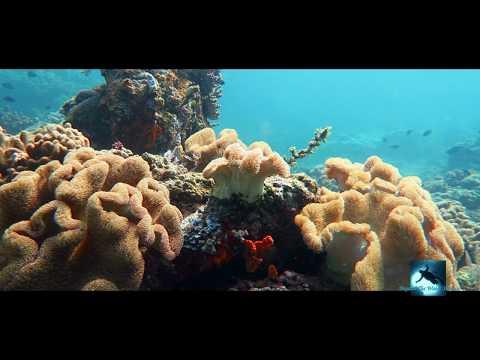 Secrets Of Hidden Coral Reefs
