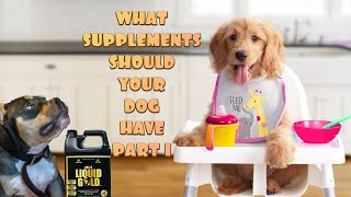 Top dog supplements that will increase your pets healthy lifestyle