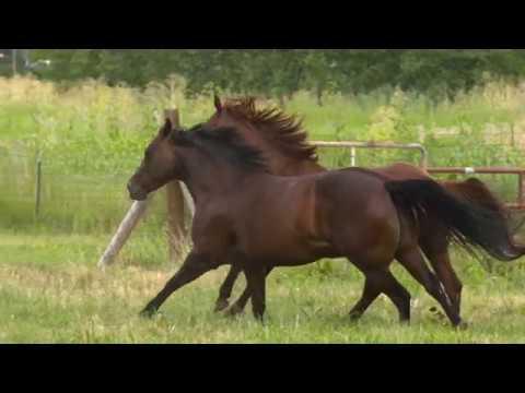 Feeding overweight horses | Purina Animal Nutrition