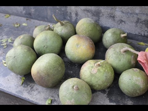 Village Food | Wood apple juice | Fruit juice recipe