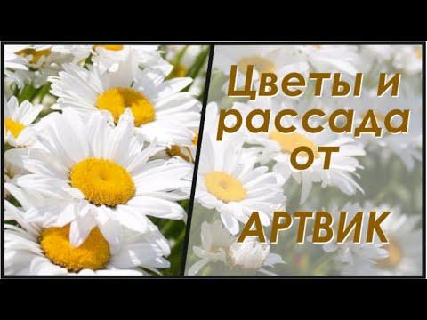 Цветы и рассада от компании АртВик.