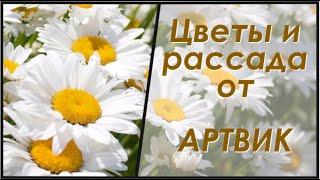 Цветы и рассада от профессионалов. АртВик.(, 2015-04-10T06:28:52.000Z)