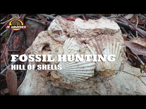 Fossil Huntings - Hill of Shells 2017 06 08