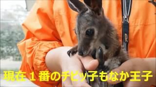 ここにいる動物はオーストラリアの有袋類のみというこだわりの動物園。 ...
