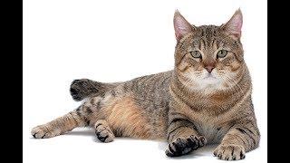 ఈ పిల్లి చేసే తమాషా చుడండి ఆశ్చర్యపోతారు ...|| very very funny cat