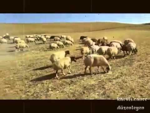 Aşık Maksut feryadi   garip bir yolcuyum www.senkaya-haber.com www.senkaya-haber.com