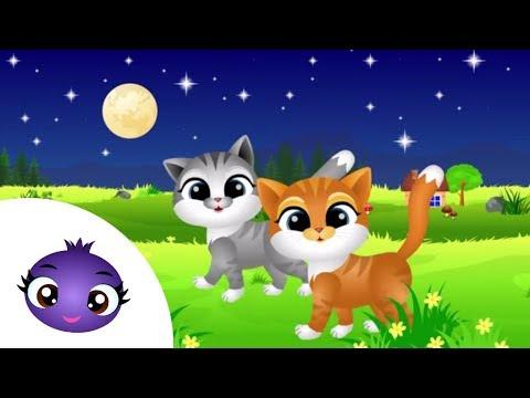 Aaa kotki dwa dla maluszka