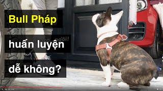 Dạy Bull Pháp ngồi nhąnh & đơn giản nhất | Cách huấn luyện chó cơ bản BoṡṡDog | D๐g training