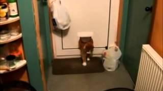 Толстый кот застря в двери