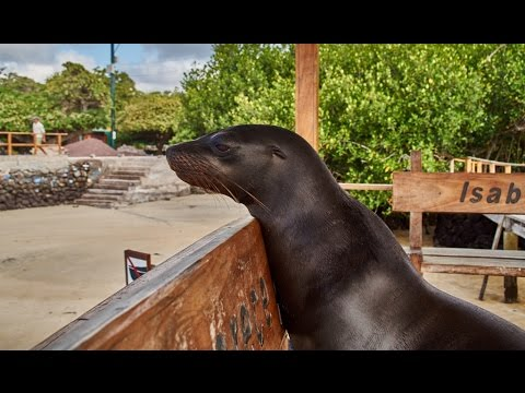 Odcinek XXXI Zoo bez krat - Isla Isabela, Galapagos