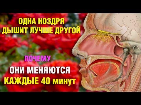 Заложена одна ноздря и болит одна сторона головы