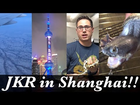 Ball Pythons in Shanghai! - Growing the Reptile hobby in China