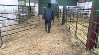 Dairy Know-How: Calf rearing