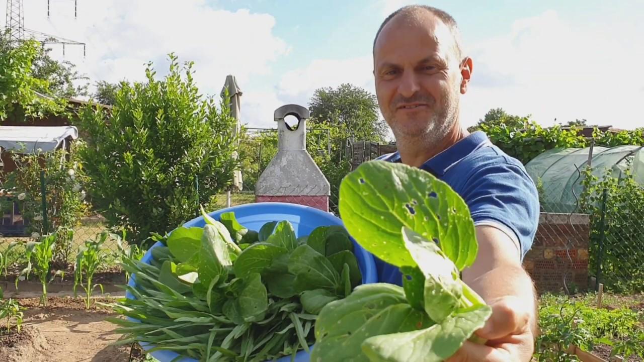 เก็บผักที่สวน ไปร้านเอเชีย ฝรั่งรีวิวของได้อะรัยมาบ้าง