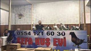 İstanbul Bağcılar Sefa Kuş Evi Güvercin Mezatı Kaliteli Oyun Kuşu Her Fiyata Kuş Var