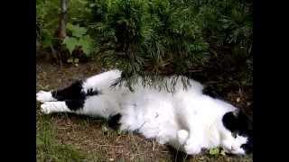 Невероятные приключения кота Васи