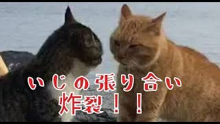 突然始まったネコのケンカ!海に落ちないかとヒヤヒヤでした。 前回の動...