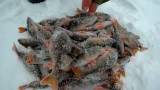 Вот это ДОРВАЛИСЬ)))Ловим окуня зимой.Подлёдная рыбалка)))