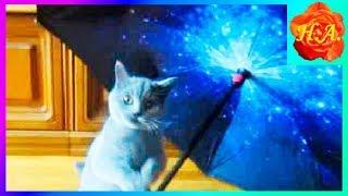 Кот Шерлок гуляет под зонтом Смешные животные🐱🐈