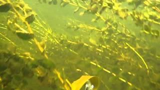 видео: Подводная охота Цна.mkv
