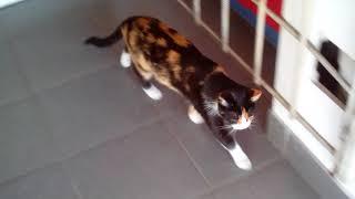 очень редкий окрас кошки