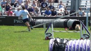 Purina Pro Plan Incredible Dog Challenge Small Agility