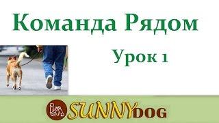 Рядом - начало обучения вашей собаки Урок 1- дрессировка собаки