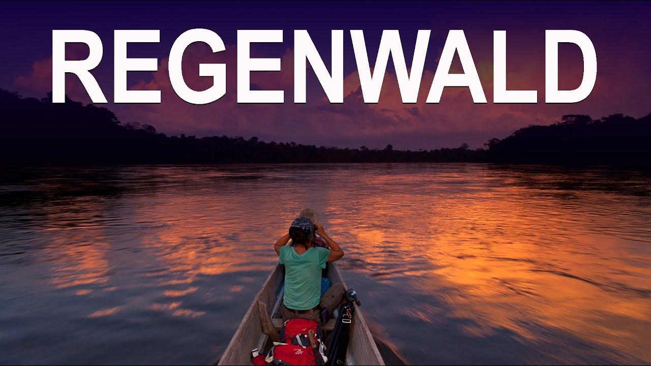 BDE Regenwald