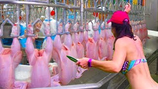 Modern Technologies Vs Primitive - How It's Made - Amazing Chicken Meat Processing Poultry Factory