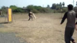 Labrador Retriever Training To Attack